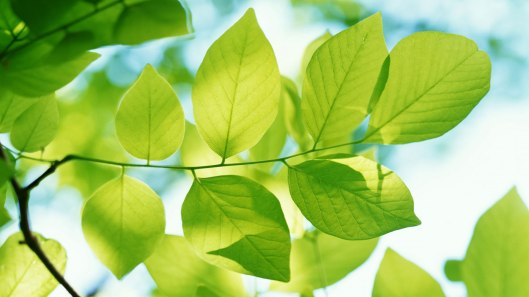 green_leaves-HD